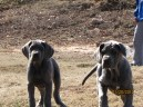 Royal Elite's Past Puppy Litter