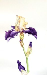 Botanicals in Watercolor @ Art in the Valley
