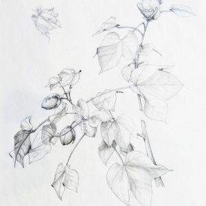 Botanical Drawing: October 2019 @ Art in the Valley