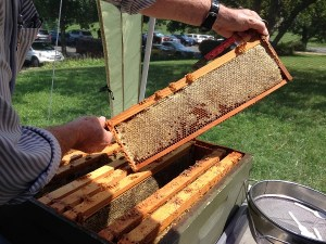 Meet the Beekeepers @ Sky Meadows State Park