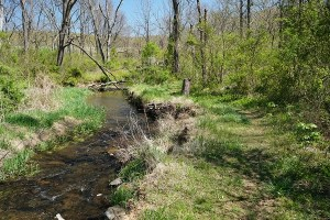 Stroll Along the Stream: Riparian Buffer Exploration @ Sky Meadows State Park