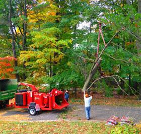 Stoneham, MA tree removal