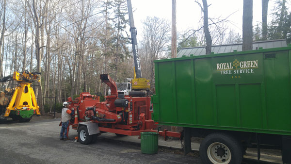 tree removal across from Phillips Academy library in Exeter, NH by Royal Green Tree Service