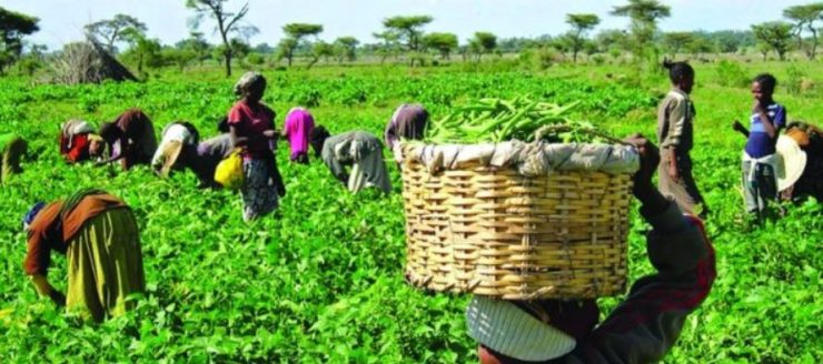 NEPAD says strengthening smallholder farmers crucial to food security