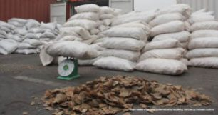 Eight-tonnes-of-pangolin-scales-seized-in-Haiphong-Vietnam-May-2019-300x158