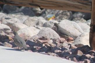 Brave birds brave the spring heat _ Photo by Royal Hopper
