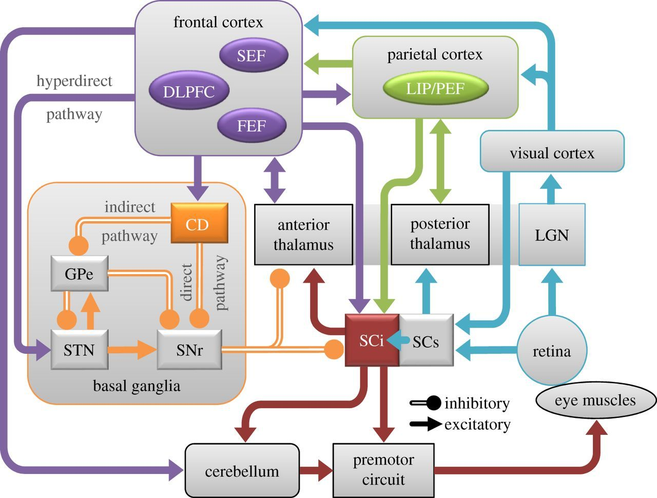 Mechanisms Of Saccade Suppression Revealed In The Anti