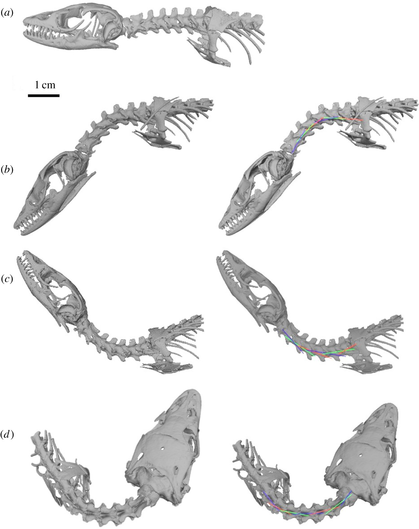 A Method For Deducing Neck Mobility In Plesiosaurs Using