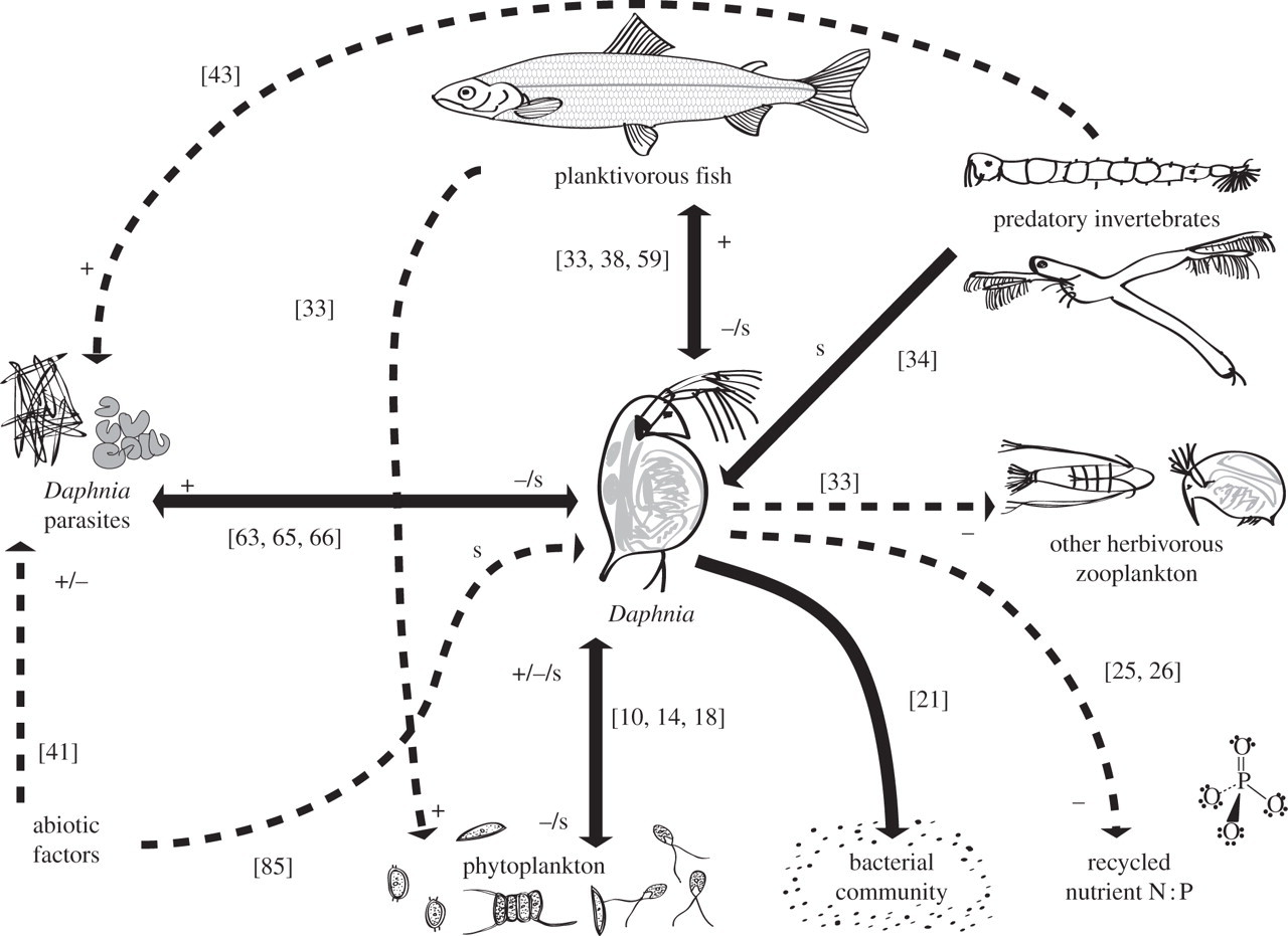 Linking Genes To Communities And Ecosystems Daphnia As An