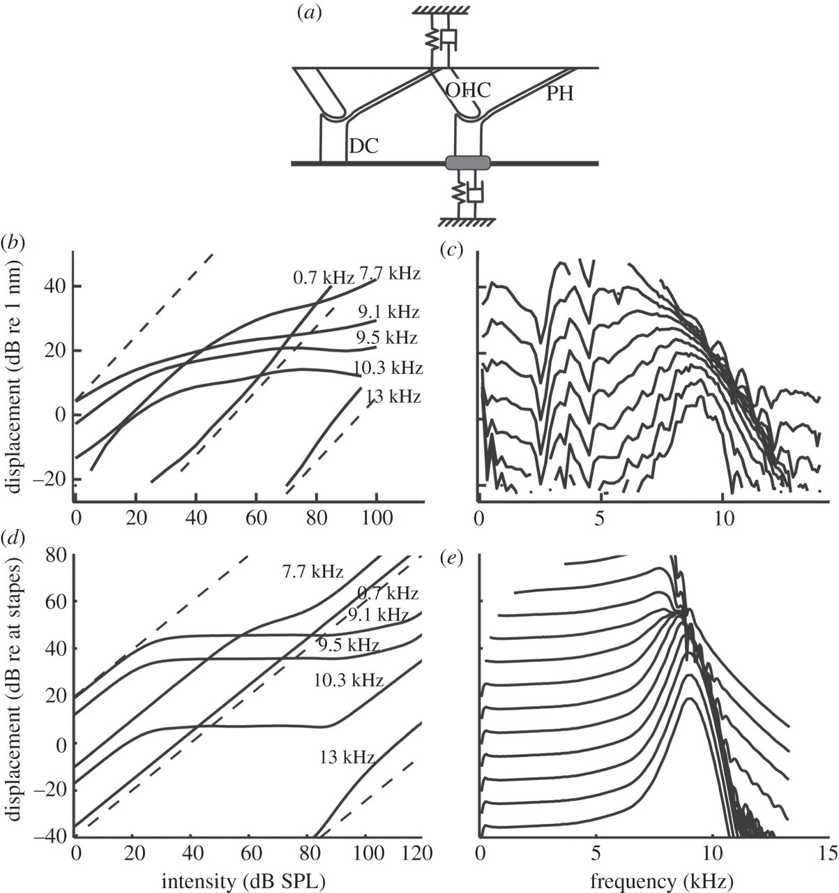 Nonlinear Models Of Development Amplification And Compression In The Mammalian Cochlea