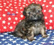 Baxter-1-5-27-17