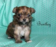 Bentley-5-5-13-17