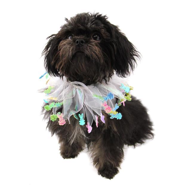 Black Mi-ki Puppy