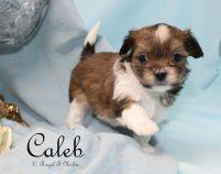 Caleb-2-3-18-a-sm