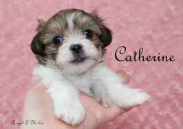 Catherine-2-9-18-a-sm