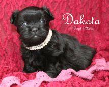 Dakota-2-6-18-d-sm