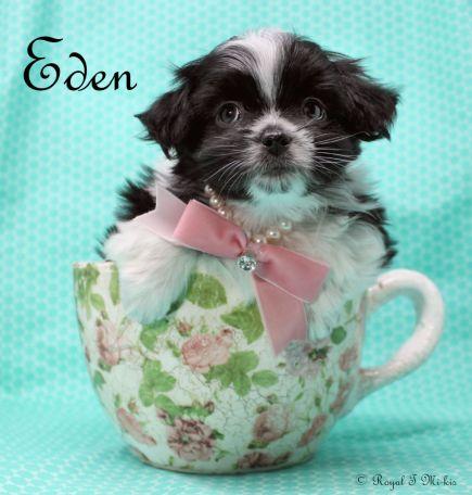 Eden-2-25-18-a-sm