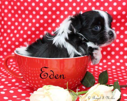 Eden-2-6-18-e-sm