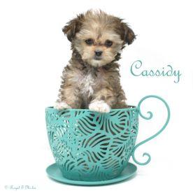 Cassidy-teacup-3-3-18-sm