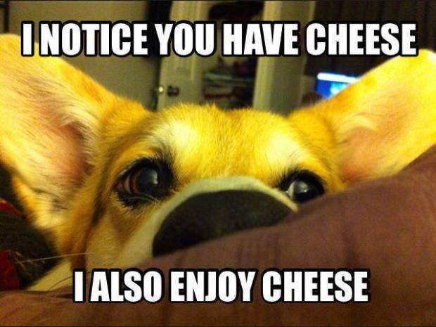 cheese-meme