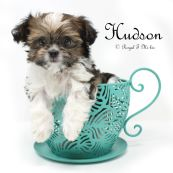 Hudson_20181005-1c