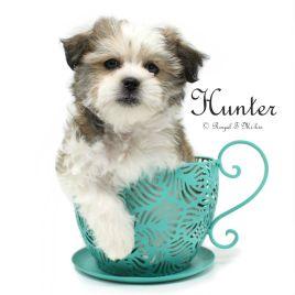 Hunter_20181004_1c