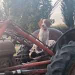 Farmer Copper