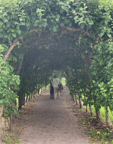 Roy 3 and MorMor walking theough an Apple Tree Tunnel!