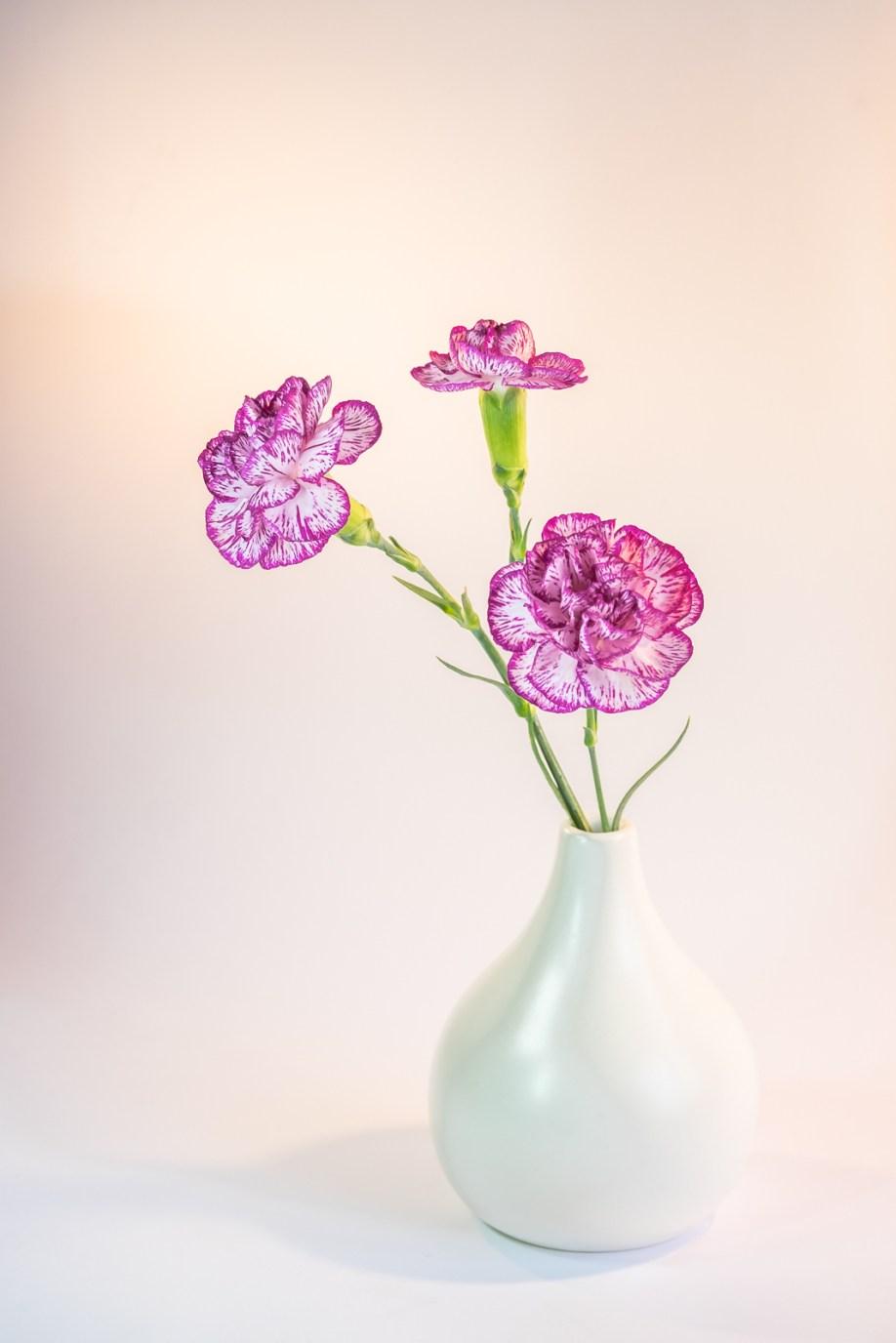 3 carnation in a Vase