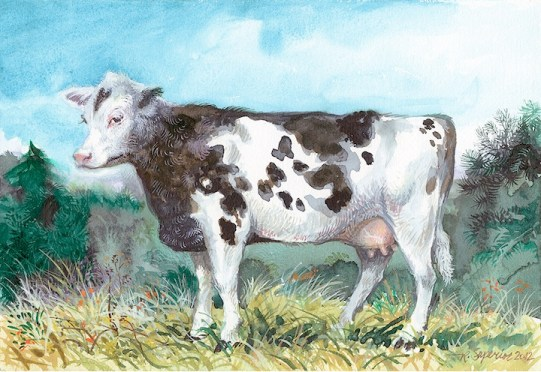 "Roy Superior, ""A Cow"""