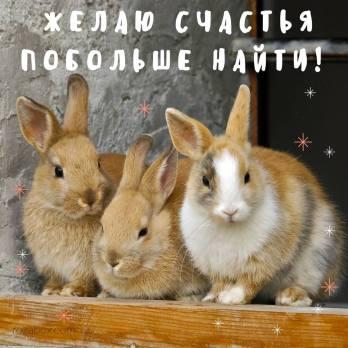 Прикольные Кролики Картинка