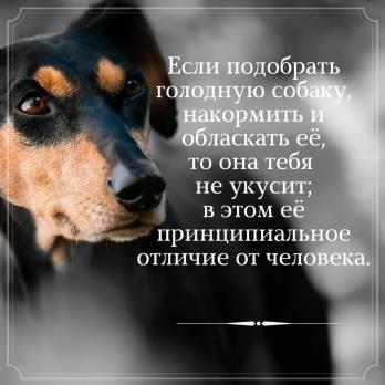 Картинка притча с собакой