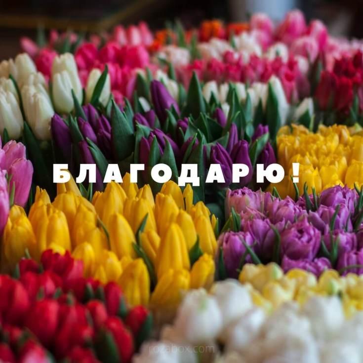 открытка с тюльпанами благодарю
