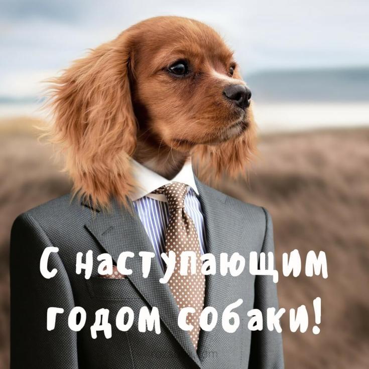 новогодняя открытка с собакой на телефон