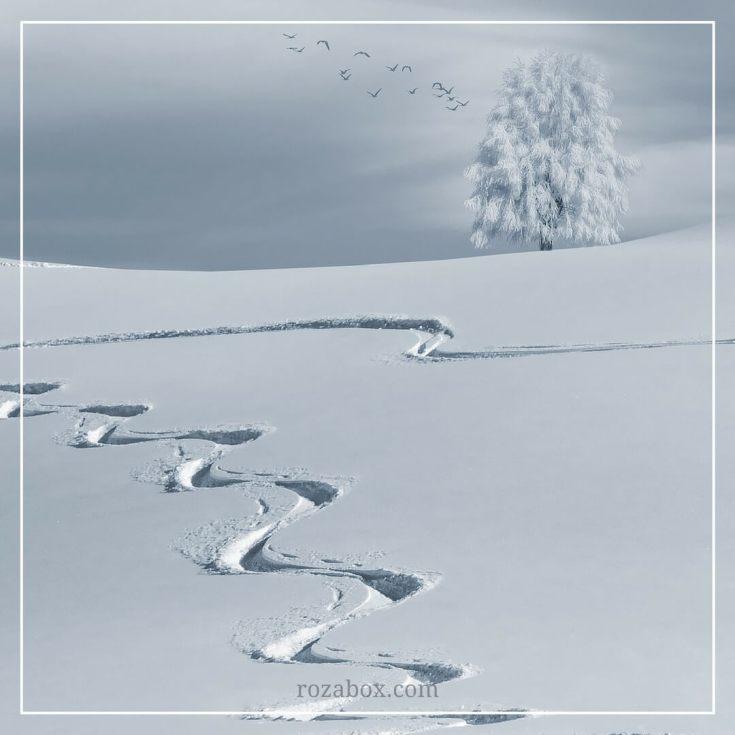 красивое фото зимы