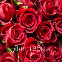 картинка - розы для тебя