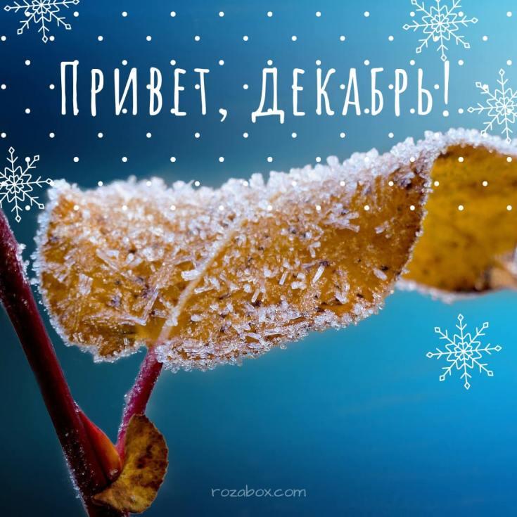 привет декабрь открытки для вибера