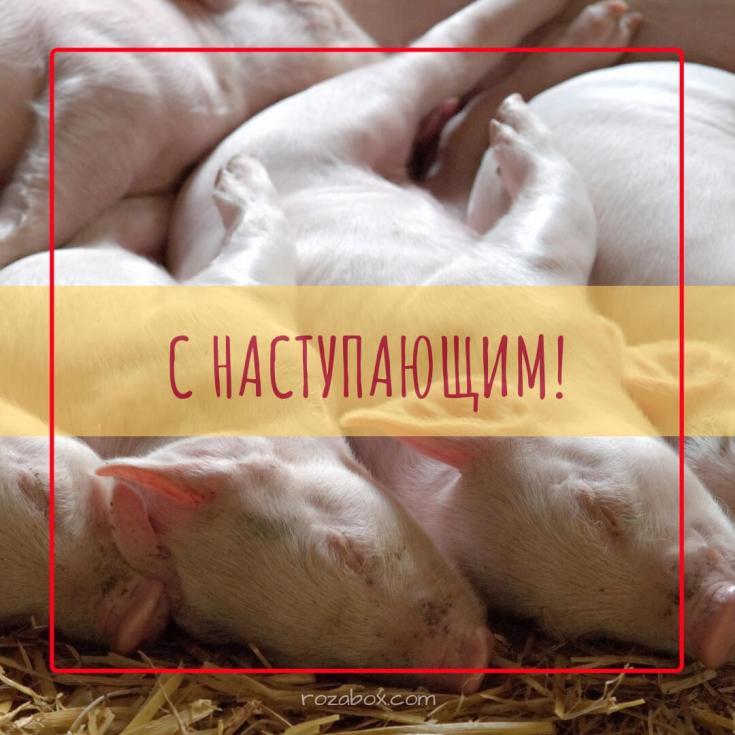 открытка со свинками на новый год