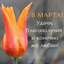 скачать открытки с тюльпанами