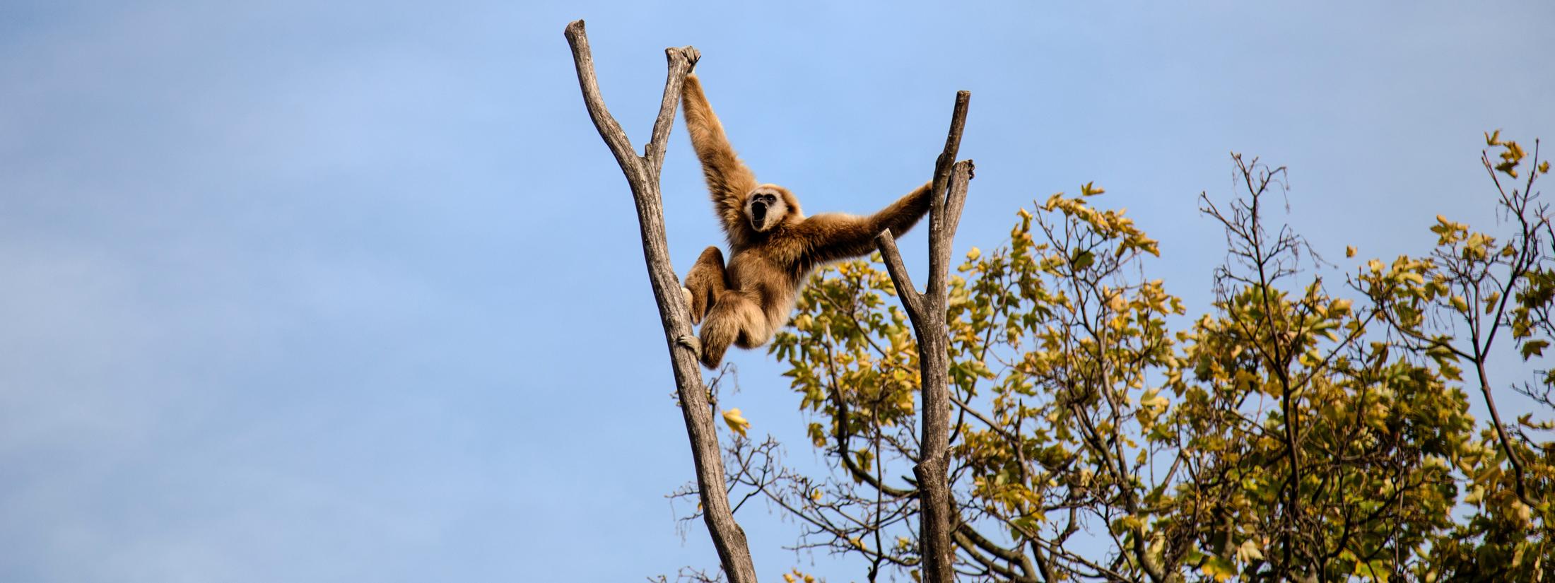 aap in boom