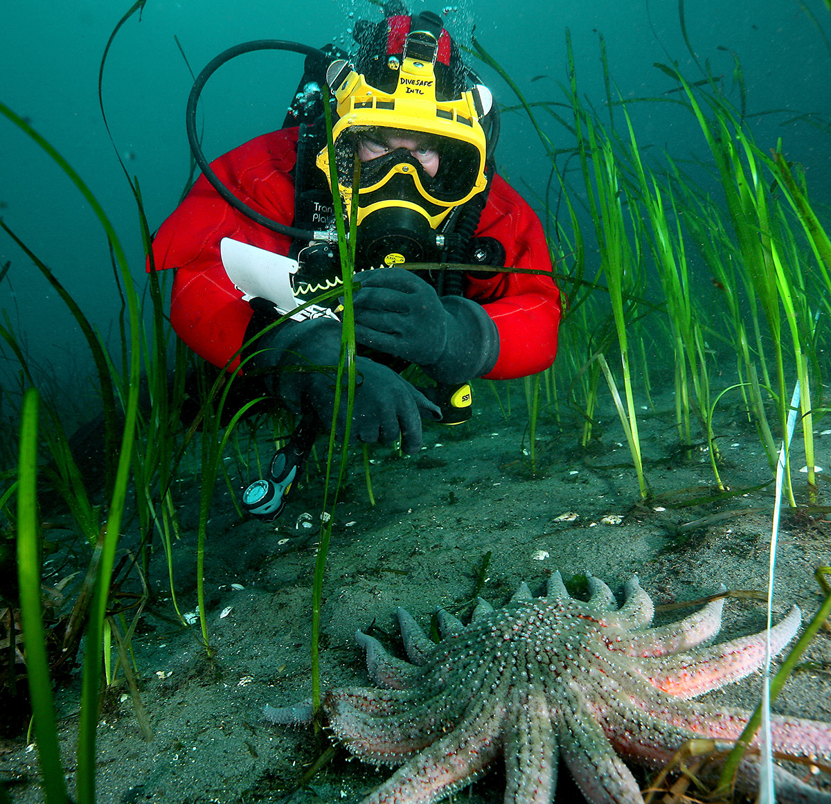 Campbell River Student Divers To Collect Critters For Aquarium