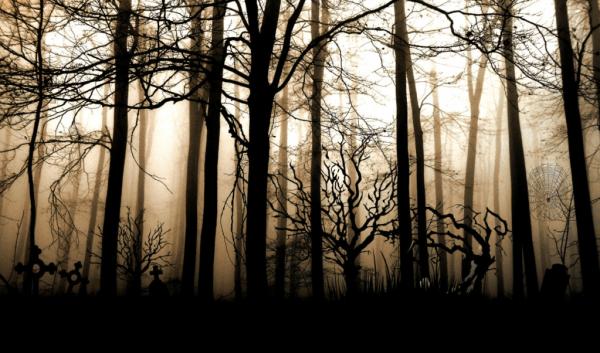 A Floresta Negra