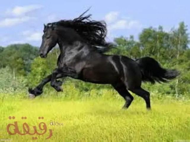 تفسير حلم الحصان فى المنام لابن سيرين والنابلسي مجلة رقيقة