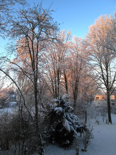 Baumreihe am Zaun entlang