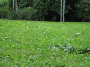 Ein Kaninchen beobachtete meine Fotografiererei aus sicherer Deckung.