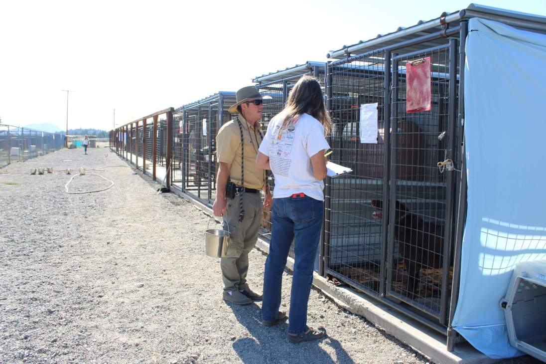 RR_Documenting_Evacuees_and_Displaced_Dogs