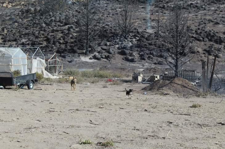 RR_Dogs__In_Fire_Zone_