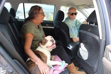 Adopt a senior rescue dog