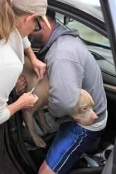 Emergency Preparedness Plan vaccinate your pets