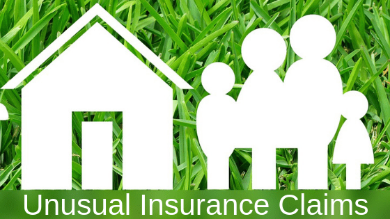 Uncommon Insurance Claims Likely Covered By Your Homeowners Policy